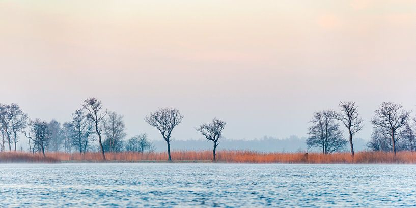 Wintersfeer op de Nieuwkoopse Plassen von Rob IJsselstein