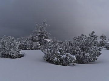 Bizar winterlandschap met bevroren coniferen in de sneeuw van Timon Schneider