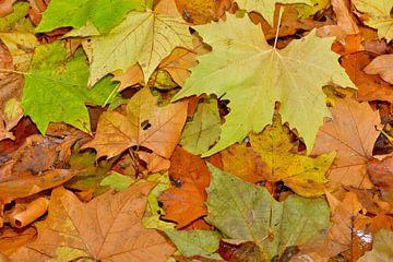 Herfst in het bos van Theo van Woerden