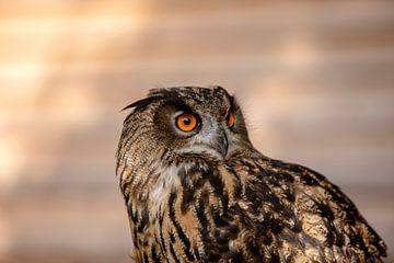 Diese Augen van Harald Schottner