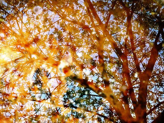 Tree Magic 32