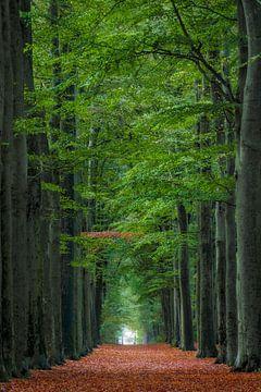 Eenzame tak in de bomenlaan van Patrick van Os