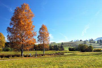 Birken im Herbst von Dirk Rüter
