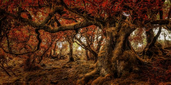 Lord of the Forest van Rigo Meens