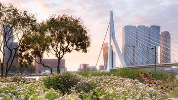 Erasmusbrug vanuit Ze Hielden Koers Park van Prachtig Rotterdam