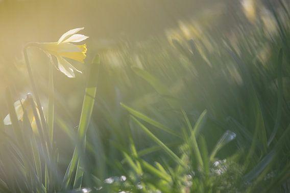 Made, tuin van de Madese natuurvrienden, Noord-Brabant, Holland, Nederland, voorjaar