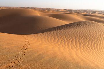 Spuren in der Wüste von Jeroen Kleiberg