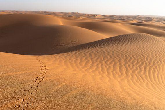 Sporen in de woestijn
