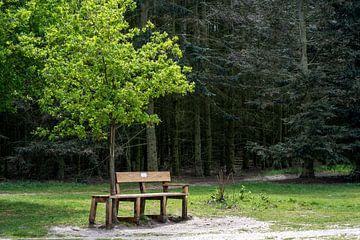 Een rustpuntje in de natuur van Petra van Teeffelen