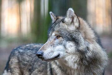 Wolf von Dennis Eckert