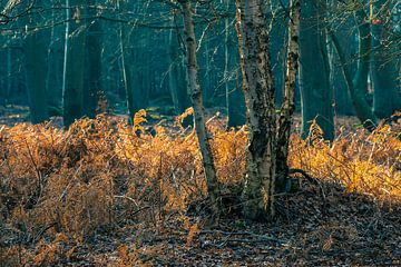 Küstenwald an der Ostseeküste bei Graal Müritz von Rico Ködder