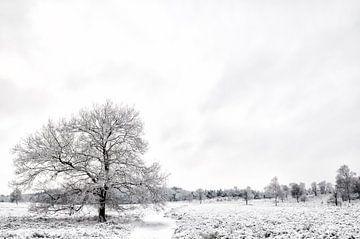 Winter op de Veluwe von Sjoerd van der Wal