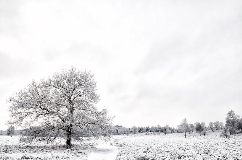 Winter op de Veluwe van Sjoerd van der Wal