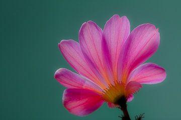 Pink & Grüner Rücken von Jeroen van Woudenberg