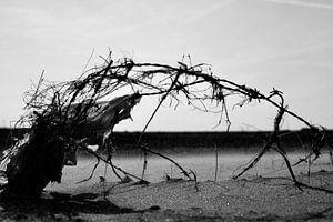 Beachwork van Alexander Frencken