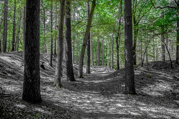 Idyllischer Wald von Photobywim Willem Woudenberg