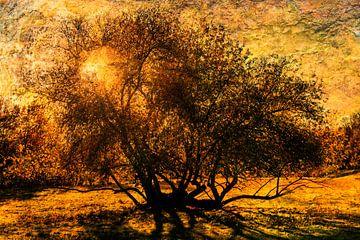 Meervoudige belichting kale boom tegenlicht met zon van Dieter Walther