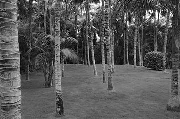 Door de bomen von Geert Jan Klinkhamer