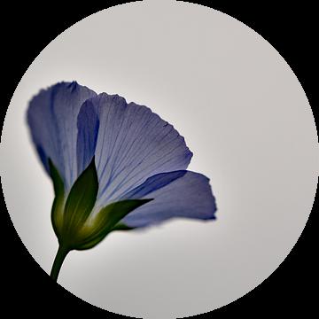 Veldbloem paars van Sascha van Dam