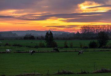 Koeien in de wei van Devlin Jacobs