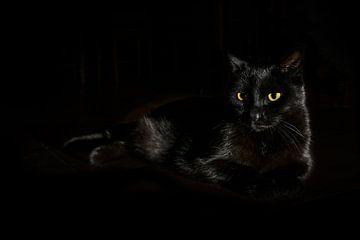 Schwarze Katze mit gelbgrünen Augen liegt auf dunklem Hintergrund, Seitenlicht, Kopierraum, ausgewäh von Maren Winter