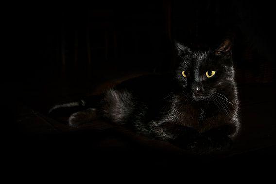 Zwarte kat met geelgroene ogen ligt op een donkere achtergrond, zijdelings licht, kopieerruimte, ges