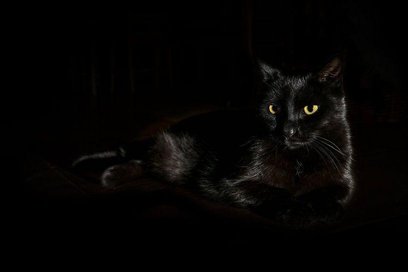 Zwarte kat met geelgroene ogen ligt op een donkere achtergrond, zijdelings licht, kopieerruimte, ges van Maren Winter