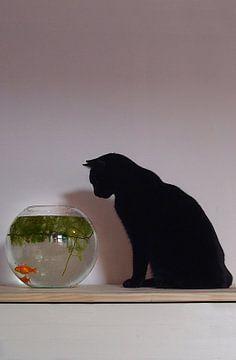 Kat loert naar vis van Evelyn Waugh