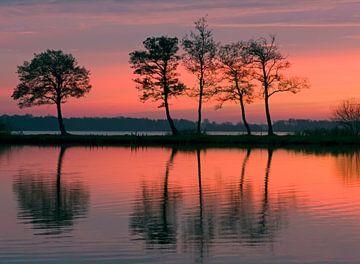 Bomen in avondlicht von Franke de Jong