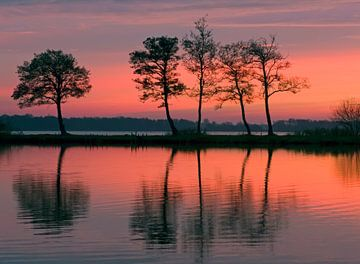 Bomen in avondlicht sur Franke de Jong