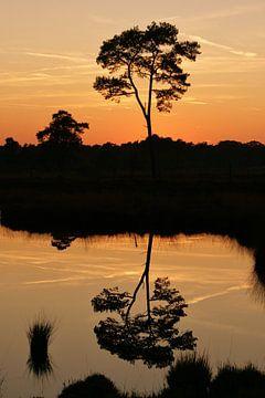 Reflection Sonnenuntergang Hatertse Mooren Nijmegen von Tessa Louwerens