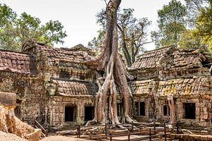 Cambodja   Angkor Ta Prohm   Ruine van Mrs van Aalst
