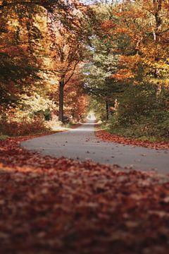 Herbst Wald von Isa V