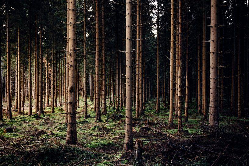 Abendlicht im Wald van Oliver Henze