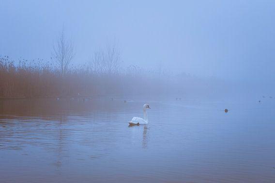 Zwaan in de Mist van Bram Kool