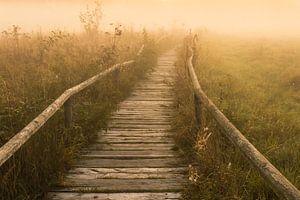 Der Nebel Pfad zum Sonnenaufgang