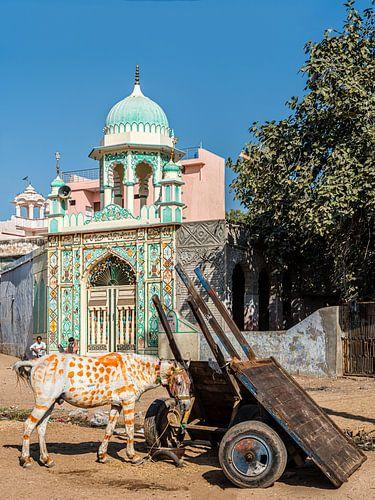Esel und Moschee, Jhunjhunu, Shekawati.