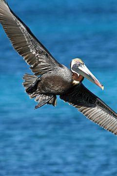 Pelikan im Flug von Jeanine den Engelsman