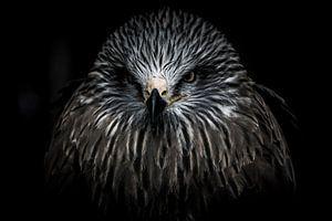 Portret van een roofvogel van