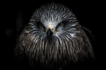 Portrai of a bird of prey  sur