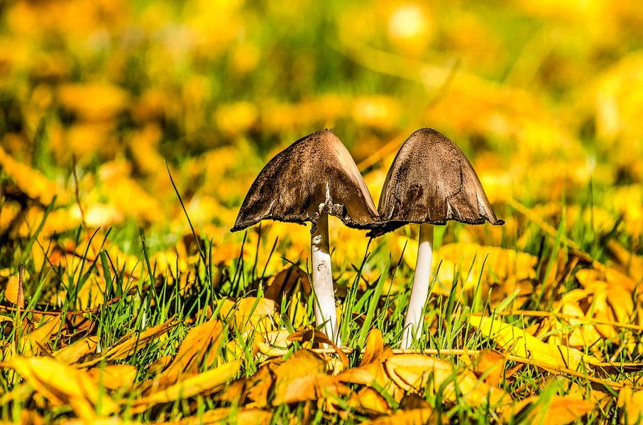 Twee paddenstoelen in een veld met herfstbladeren van Frans Blok