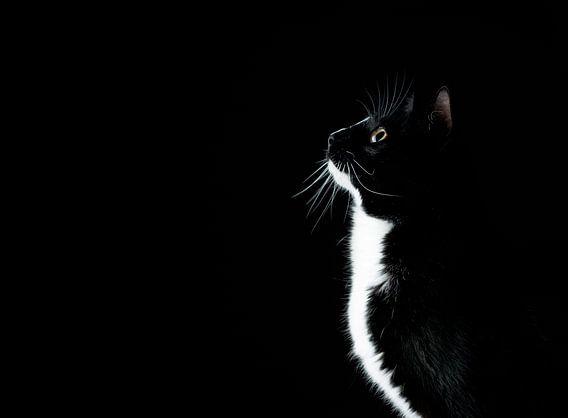 schwarz / weiße Katze, die neugierig schaut
