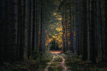 Herbst von Jeroen Linnenkamp