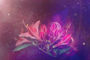 tros bloemen van