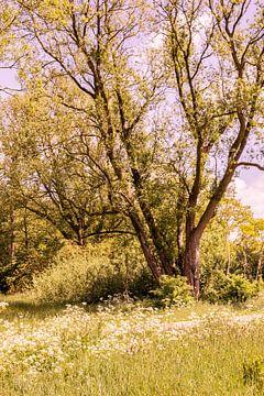 Lage Bergse Bos - Landschaft Nr. 7 von Deborah de Meijer