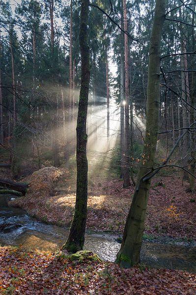 Winterlicht im Wald 2 von Adriana Mueller
