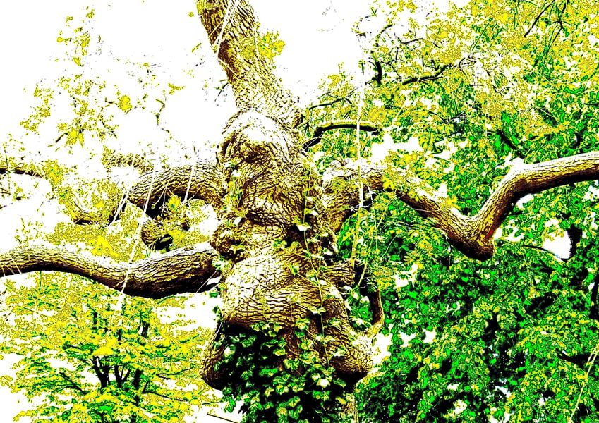 Tree Magic 184 van MoArt (Maurice Heuts)