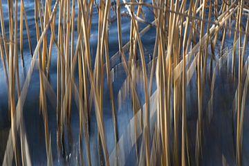 Gouden rietstengels in blauw zeewater bevlekt en in bewegingsonscherpte bewegen in de wind, abstract van Maren Winter