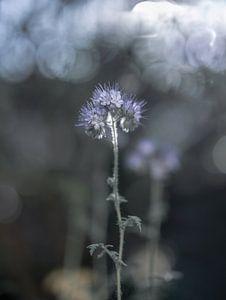Blumen Teil 157 von Tania Perneel