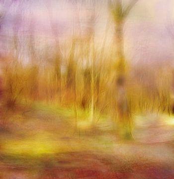 Licht in het bos van Claudia Gründler